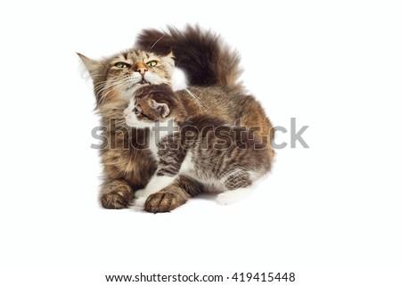 Cat hugs kitten - stock photo