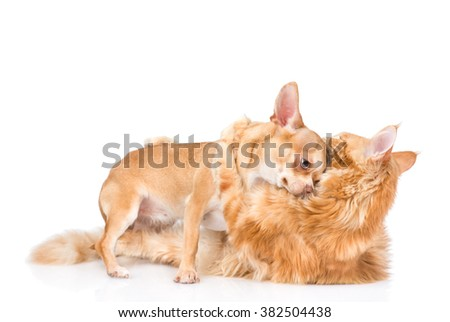 Cat hugs puppy. isolated on white background