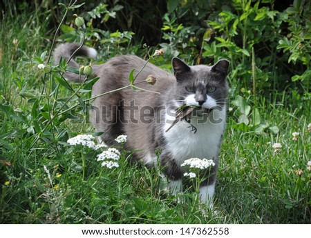 Cat hunted and caught a bird. The Cat in the teeth holding prey. - stock photo