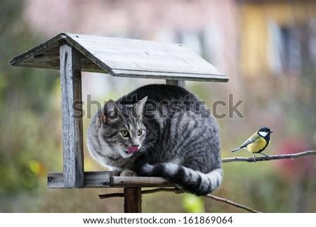 cat hunting a bird - stock photo