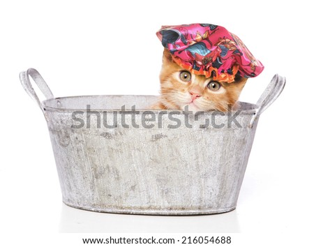 cat in a bath with shower cap - stock photo
