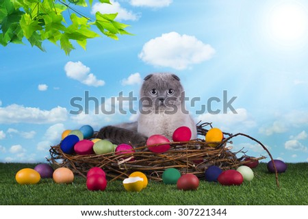 cat in a bird's nest on the green grass - stock photo
