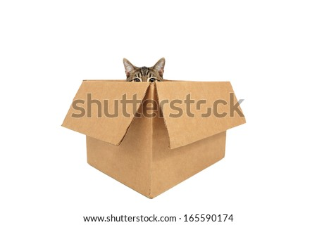 Cat in a box peeking out - stock photo