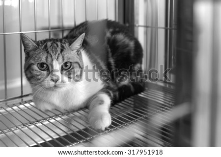 cat in a cage, black and white photo - stock photo