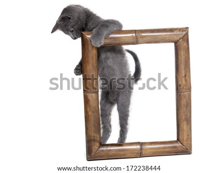 cat in a frame on a white background in studio - stock photo