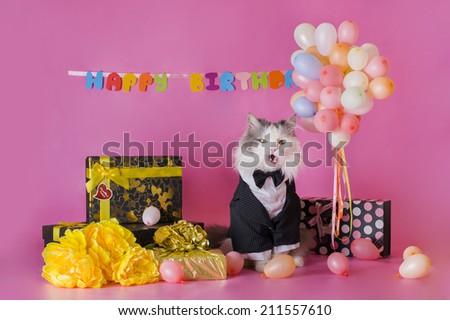 cat in a jacket congratulates  - stock photo