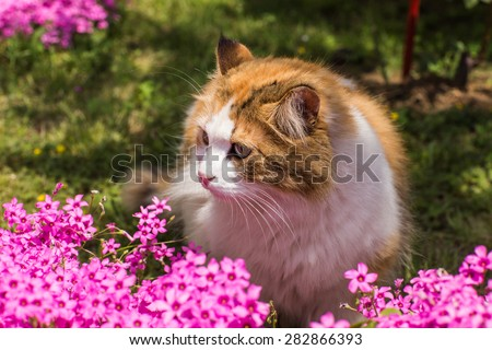 cat in a pink flowers