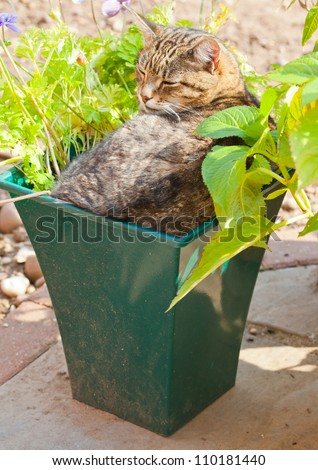 Cat in a plant pot - stock photo