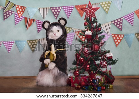 Cat in a suit monkey eating a banana at the Christmas tree