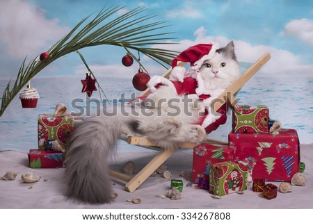 Cat in a suit of Santa Claus celebrates Christmas on the beach