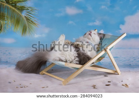 Cat in a swimsuit sunbathe on the beach