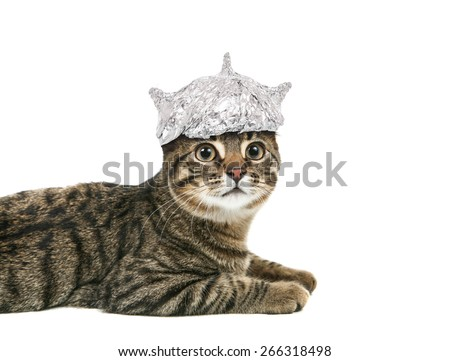 Cat in a tin foil hat looking up - stock photo