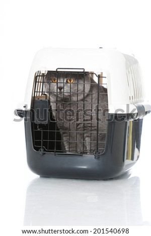 Cat in a transport box isolated on white