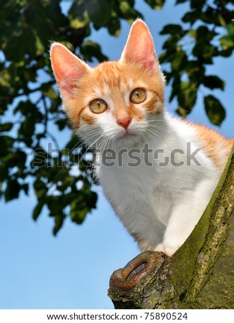 cat in a tree - stock photo