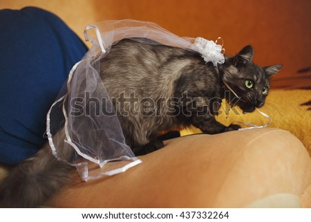 Cat in a veil sits on the sofa