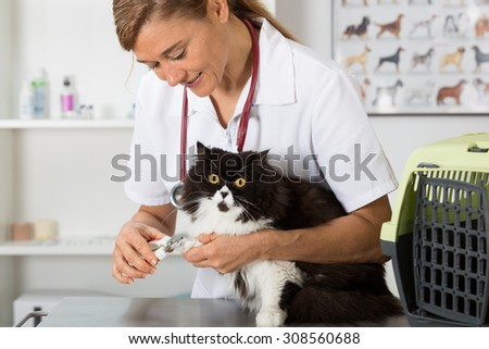 Cat in a veterinary clinic hairdresser cutting nails