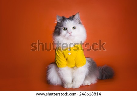 cat in a yellow shirt on an orange background - stock photo
