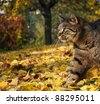 Cat in autumn garden - stock photo