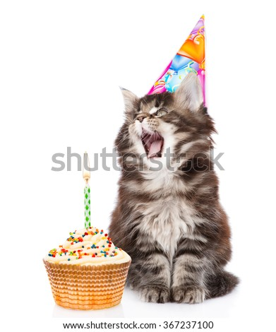 Cat in birthday hat blows out the candles on the cake. isolated on white background