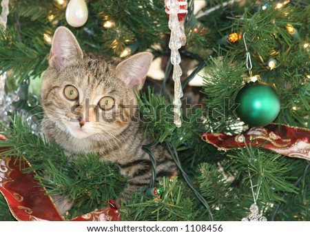 Cat in Christmas Tree - stock photo