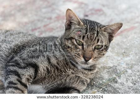 Cat in community - stock photo