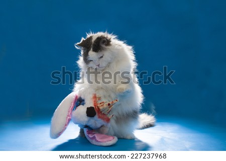 cat in costume evil bloody hare - stock photo