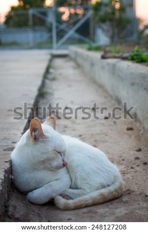 cat in cullis - stock photo