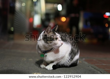 cat in dark street look back in hong kong - stock photo