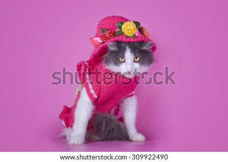 Cat in fashionable dress on a pink background isolated