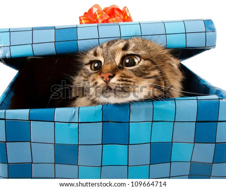 cat in gift box - stock photo