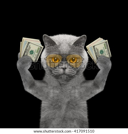 Cat in glasses holds in its paws a lot of money -- isolated on black background - stock photo