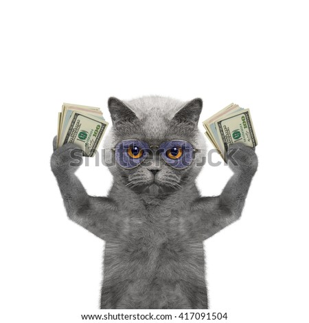 Cat in glasses holds in its paws a lot of money -- isolated on white background - stock photo