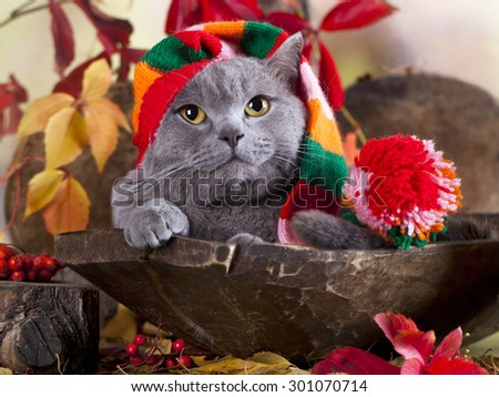 cat in gnome hat - stock photo