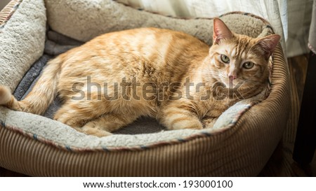Cat in His Cat Bed - stock photo