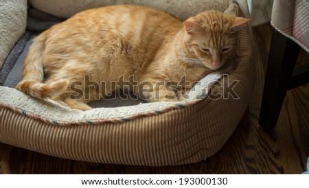 Cat in His Cat Bed - stock photo