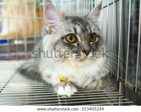 cat in kennel cage - stock photo