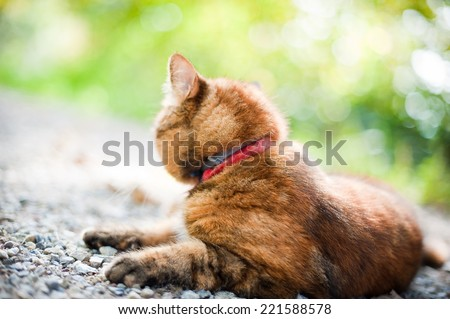 Cat in Nature