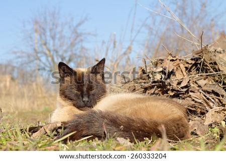 cat in nature - stock photo