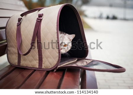 cat in pet carrier on a park bench - stock photo