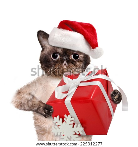 Cat in red Christmas hats with gift