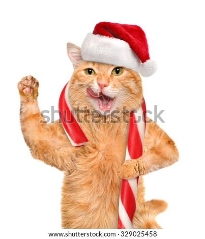 Cat in red  hat holds a Christmas candy. Isolated on white.