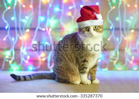 cat in Santa Claus xmas red hat on bright bokeh background  - stock photo