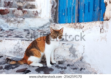 Cat in Santorini, Greece - stock photo