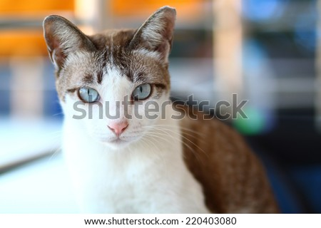 cat in temple - stock photo