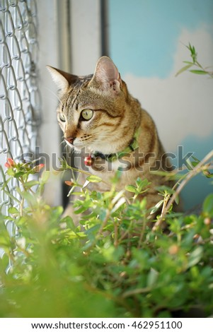 Cat in the bamboo garden.