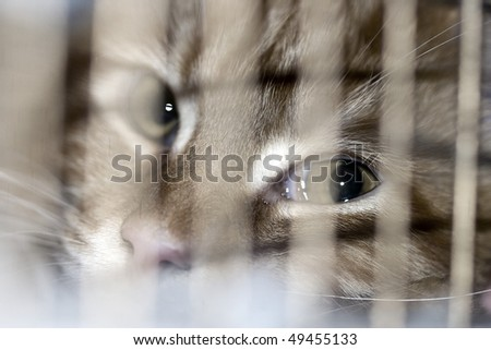 Cat in the cage at exhibition - stock photo