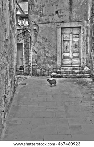 Cat in the Courtyard in the Historic Center City of Sorano in Italy, Retro Image Filtered Style