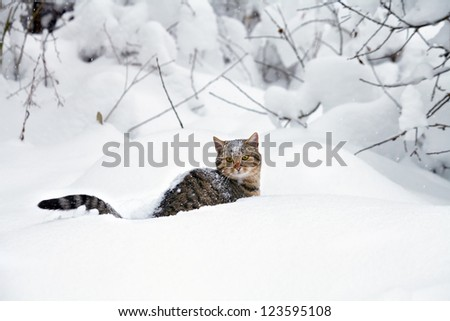 Cat in the deep snow - stock photo