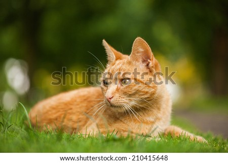 cat in the garden - stock photo