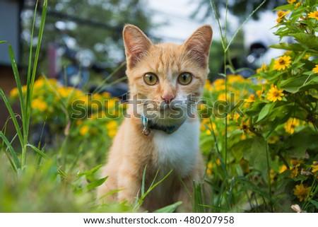 Cat Garden Stock Photo 480207958 Shutterstock